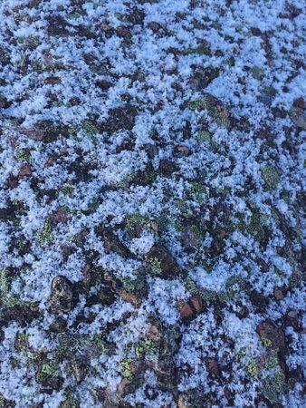 Lichen the snow