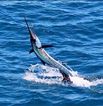 Hustler Sportfishing