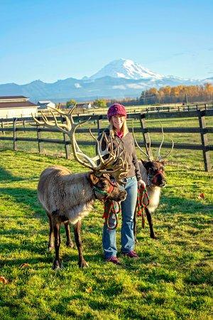 Buckley, Etat de Washington : The reindeer showcasing the farm's namesake. Bunny (left) and Tinsel (right) with their guardian, Sophia.
