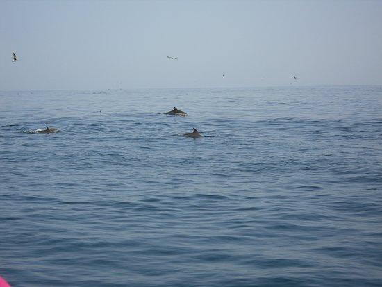 المحيط الهندي: Indian ocean