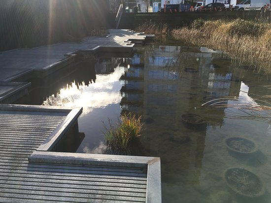 Portland Meditative Garden Tour: Japanese and Chinese Gardens: Winter morning at Tanner Springs