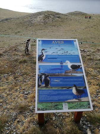 Punta Arenas, Chile: Sign with penguin on Isla Magdalena.