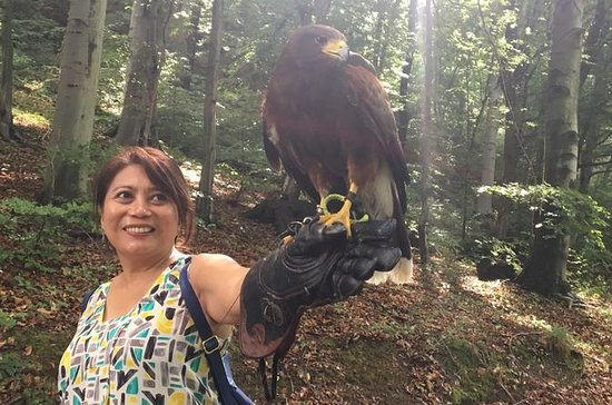 Medvednica Nature Park Falconry Tour...