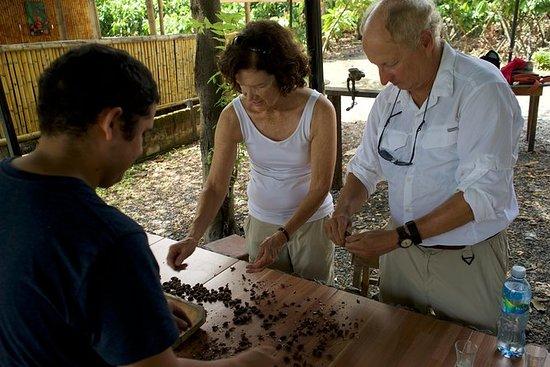 ¡Granja de cacao y fabricación de...
