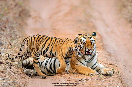 Two Night Safari Experience at Tadoba...