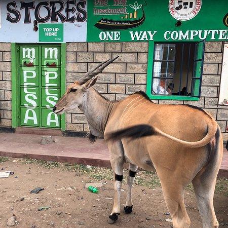 Narok Photo