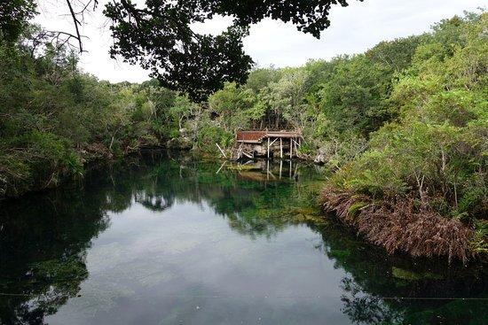 Prices And Hours Picture Of Cenote Jardin Del Eden Yucatan