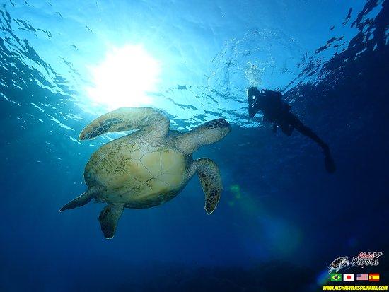 Diving with Turtle in Okinawa. Mergulho em Okinawa com Tartaruga Aloha Divers Okinawa
