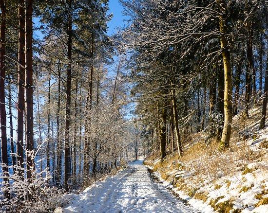 Шотландские границы, UK: Corby Linn, Scottish Borders
