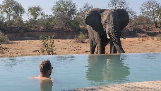 Ngala Private Game Reserve, แอฟริกาใต้: Hey, big boy! Zum Artikel: https://niedblog.de/andbeyond-ngala-tented-camp/