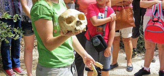 Copia del cranio di Miguelón, nome con cui gli scienziati hanno battezzato il cranio meglio conservato tra quelli rinvenuti ad Atapuerca e, presumibilmente, tra tutti i resti fossili umani rinvenuti fino ad oggi.