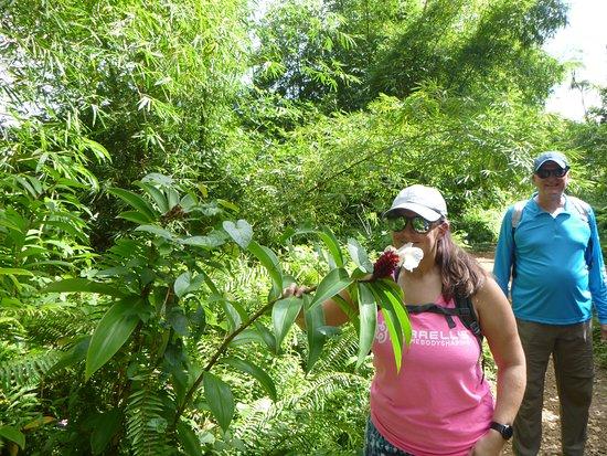 Recorrido para grupos pequeños por las zonas menos transitadas de la selva de El Yunque: Tour guide Sahid pointed out several plants, their uses, and gave us some great insight into the biology of El Yunque.