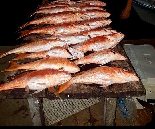 Playa del Carmen, México: Fishing