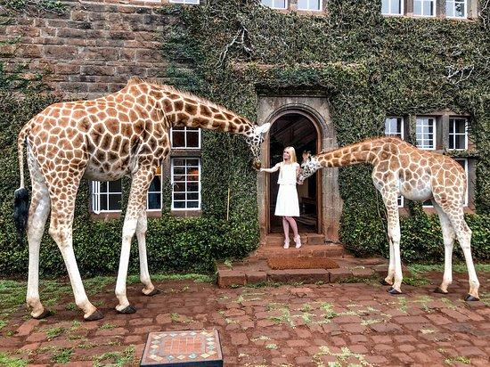 Giraffe Manor: Giraffe interaction
