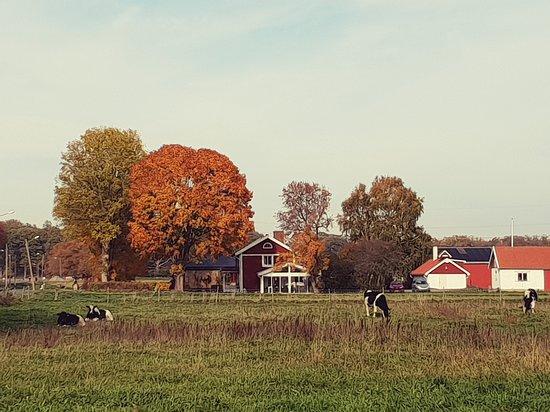 Kronoberg County, Suecia: Una fattoria nella contea di Kronoberg