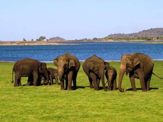 Dambulla, Srí Lanka: Minneriya Jeep Safari