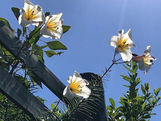 Autentiske Private Tour, Showcasing Napiers Treasures: Beautiful flowers