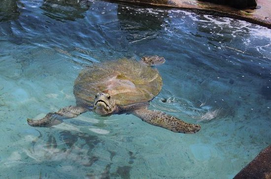 Turtle Encounter at Coral World Ocean...