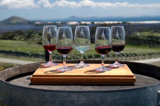Tour di degustazione del vino Maipú
