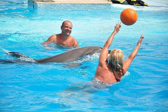Nadar con delfines en Hurghada
