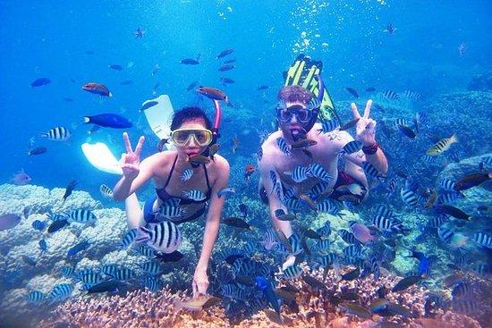 Bali Lovina Dolphin und Menjangan...