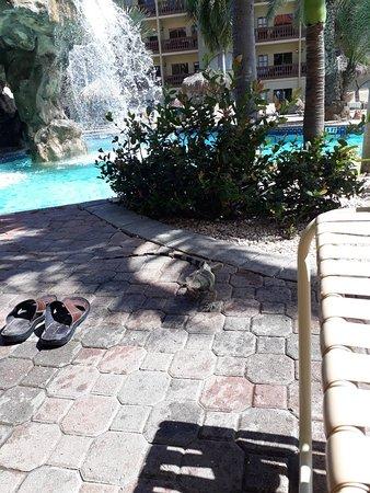 Eagle Aruba Resort & Casino: Aruba 02/12/2019