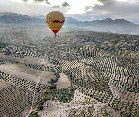Preciosos paisajes de olivos en la provincia de Jaén en Andalucía