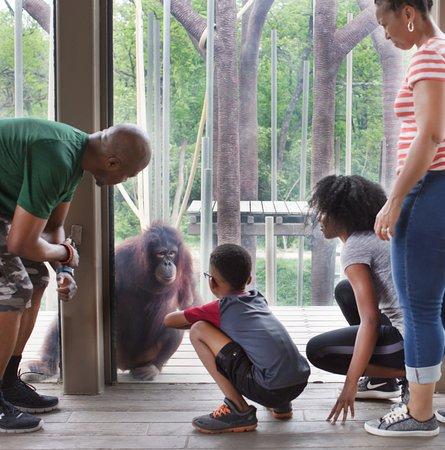 Orangutan Canopy