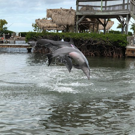 "We stopped at the dolphin research center at 9:15am. They were not busy and we had a lot of one on one time with the staff.  They were wonderful!  Very knowledgeable and friendly!  The dolphins were getting fed and also perform several of their ""tricks"".  They were exciting to watch."