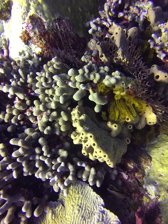 Sponges and coral