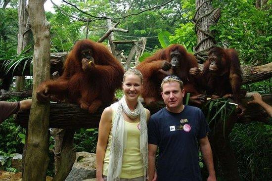 私人旅游:新加坡动物园早晨之旅,红毛猩猩之间可选择丛林早餐