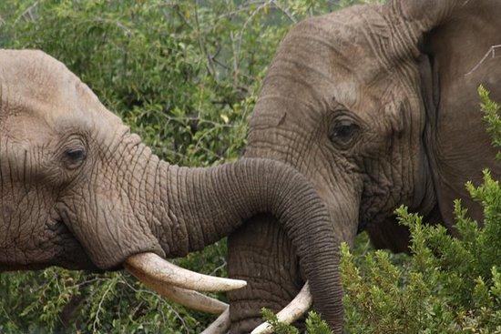 Parc national de Pilanesberg au...