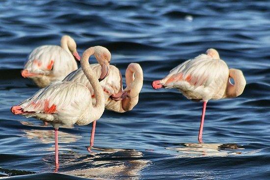 Excursion au parc national de Doñana et...