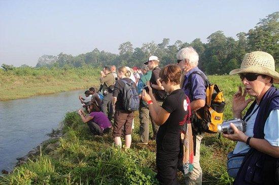 Full Day Jungle Safari Tours i ...