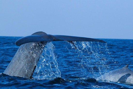 Mirissa Whale Watching (excursion...