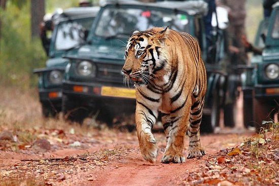Skip the Line Ranthambore National...