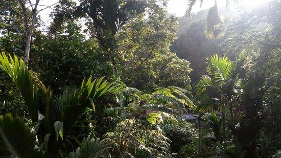 Landscape - Rain Forest Inn Photo