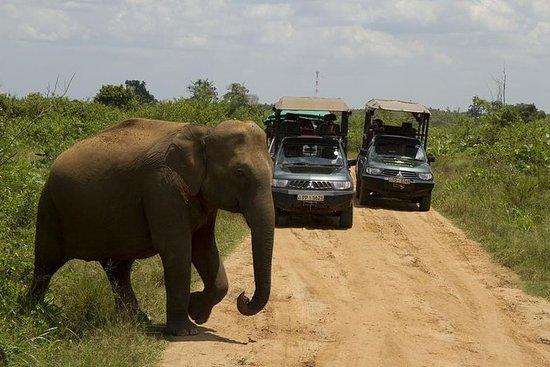 Privat tur: Bundala National Park...