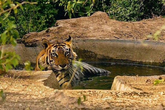Sariska Tiger Reserve Safari...