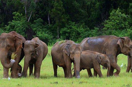 Udawalawe National Park safari tur...