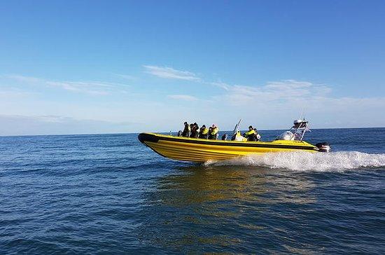 Black Beach RIB Boot Safari