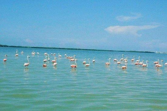 Wild Flamingo Adventure