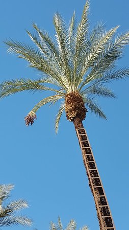 Palm With Ladder