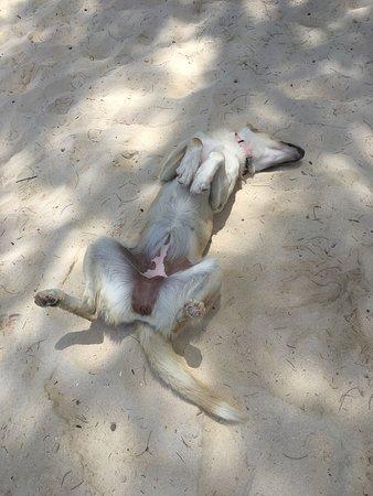 Rarotonga, Islas Cook: Its a ruff life