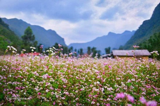 Ha Giang Genuine Tours - Ha Giang Adventure Tours