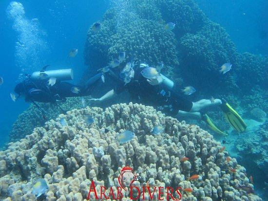 Arab Divers : 201218