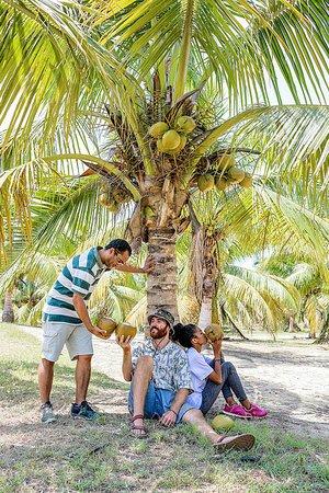 Si vous arrivez sur SAMBAVA par avion, vous ne manquerez pas de survoler les immenses plantations de cocotiers de la SOAVOANIO avant votre atterrissage à l'aéroport de la ville. Les activités fort attrayantes, sur l'émasculation (des fleurs mâles) des cocotiers nains et les transformations de la noix de coco, font de la visite de la cocoteraie de SOAVOANIO, un circuit agro-touristique incontournable pour tout séjour à Sambava. Durée: 3h à 4h de temps. Du lundi au vendredi. Seulement le matin.