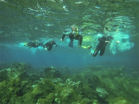Snorkeling Excursion In South Tenerife - 3,5 Hours: All together in South Tenerife