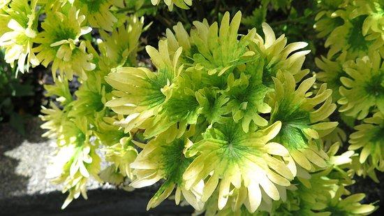 The Secret Garden Utama: Coleus - Plants/Flowers at Secret Garden