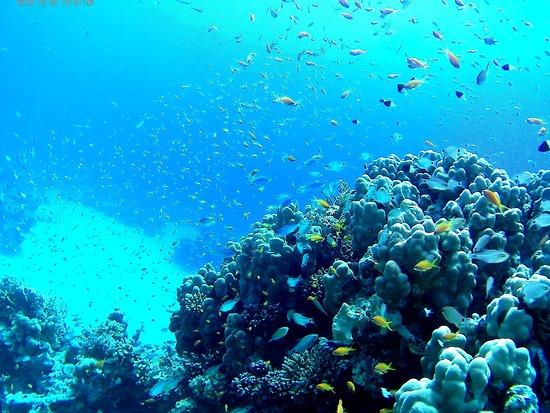 Diving Ocean Makadi Bay Hurghada Aktuelle 2019 Lohnt Es Sich